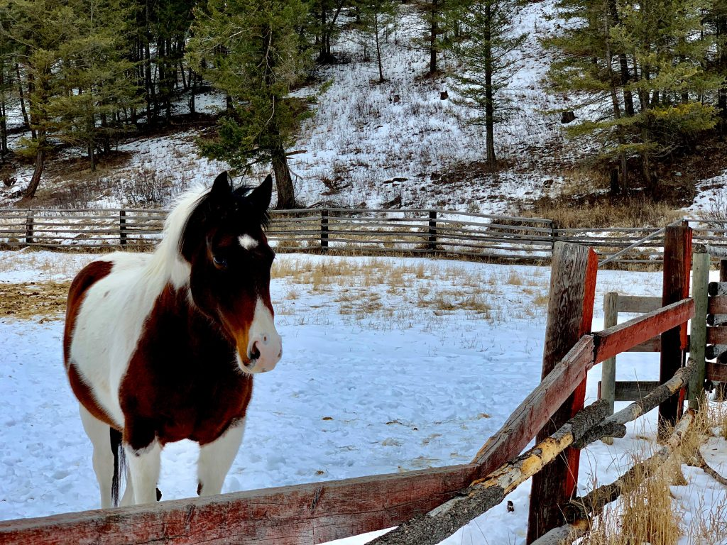 , Transitional Living, Top of the World Ranch Addiction Treatment and Rehabilitation Centre